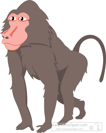 Animal classroom baboonclipartjpg. Monkeys clipart baboon