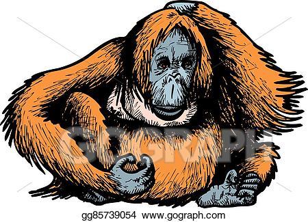 Ape clipart big monkey. Vector art orangutan drawing