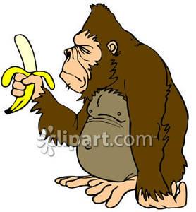 Ape clipart cartoon. An holding a peeled