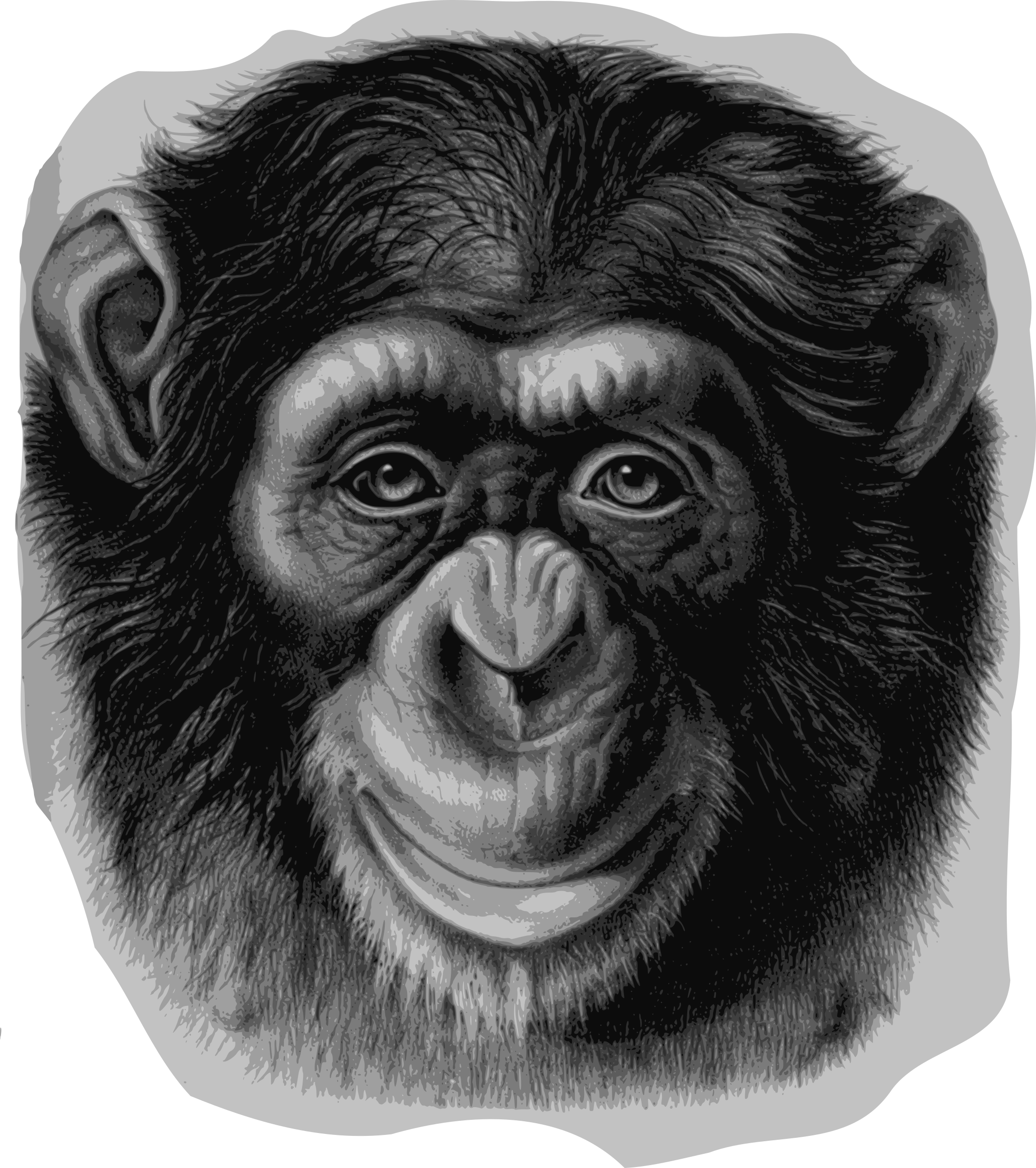 monkey clipart chimpanzee