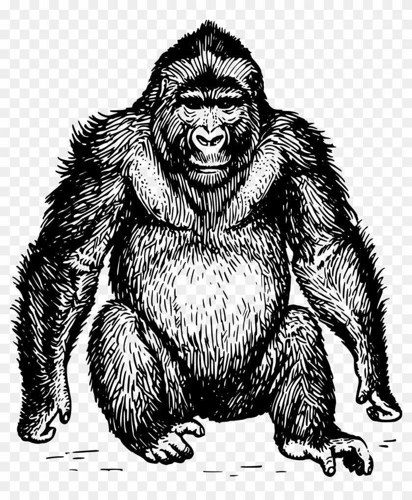 Ape clipart clip art. Free gorilla head hd