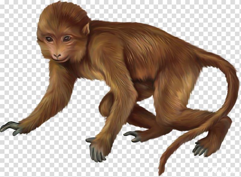 Primate baby monkeys monkey. Ape clipart macaque