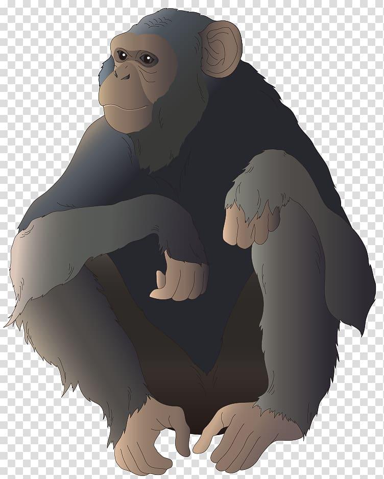 Common chimpanzee gorilla monkey. Ape clipart monket