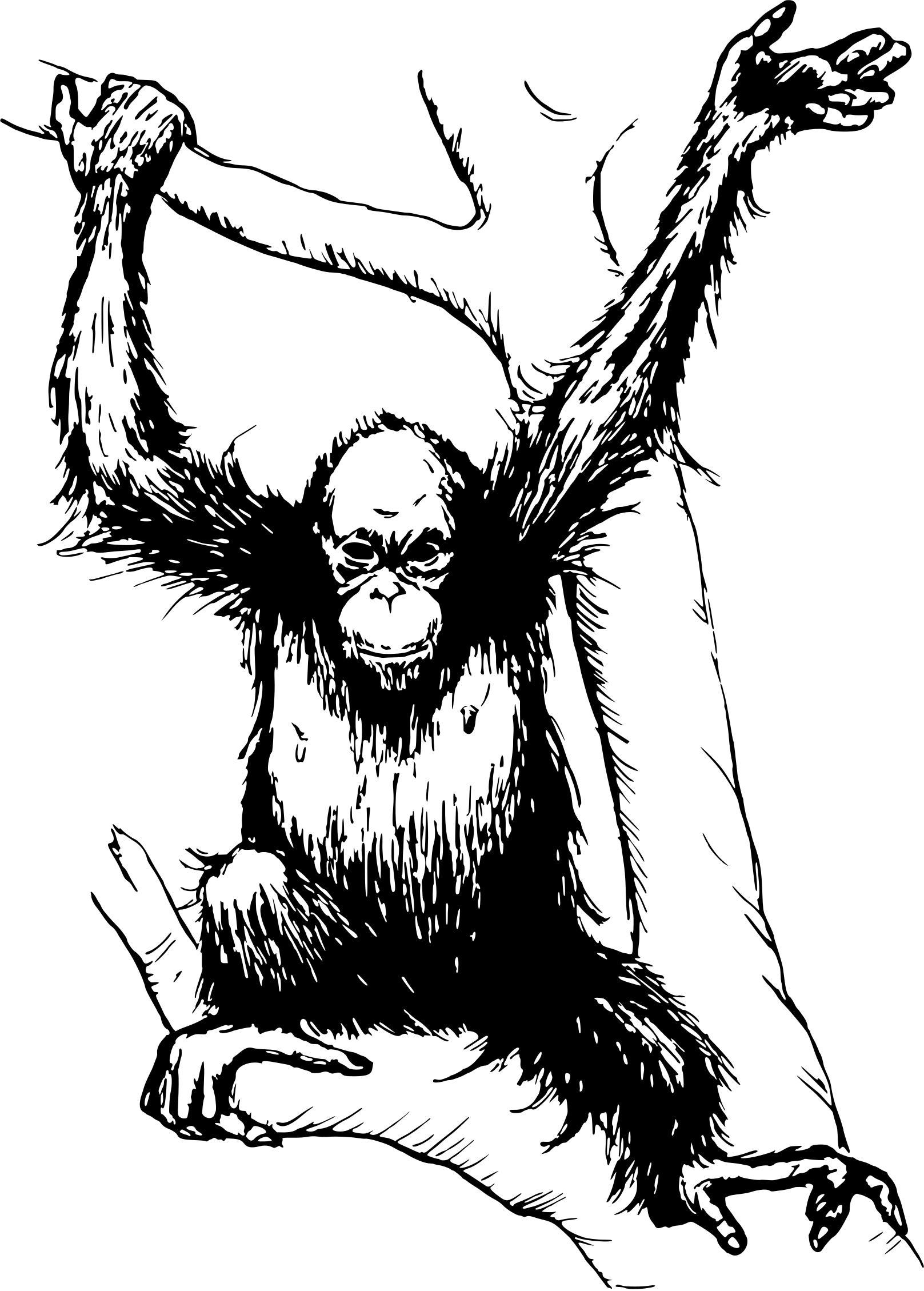 Design droide download. Ape clipart orangutan