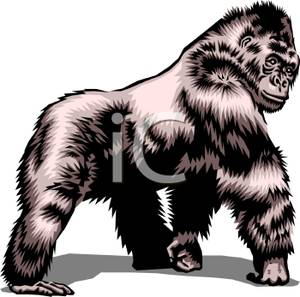 Ape clipart realistic. Style gorilla royalty free