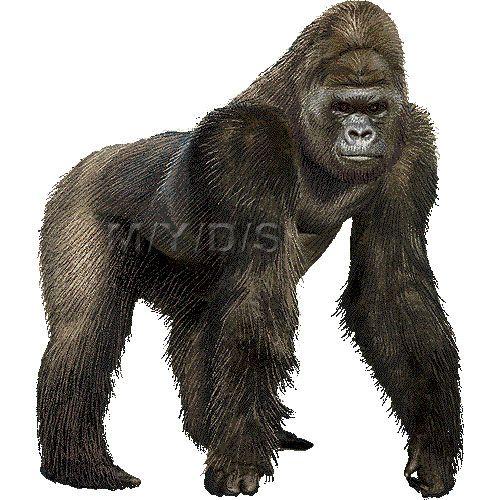 Ape clipart realistic.  best clip art
