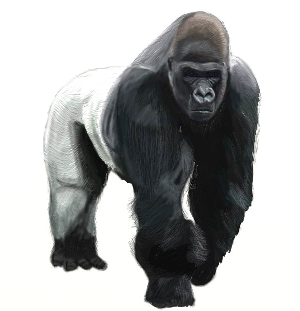 Ape clipart realistic. How to draw a