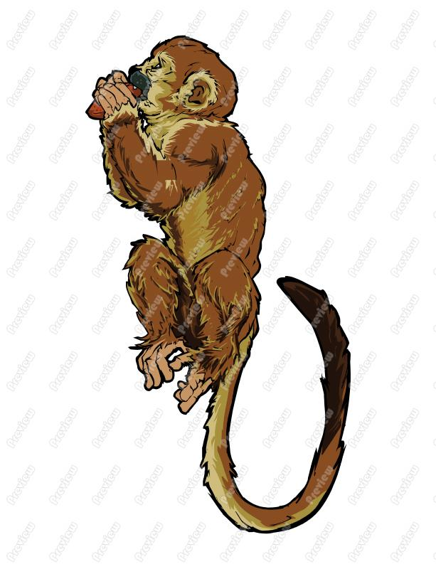 Ape clipart realistic. Monkey drawing at getdrawings