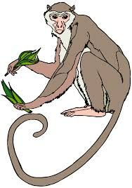 Monkeys swinging drawing google. Ape clipart realistic