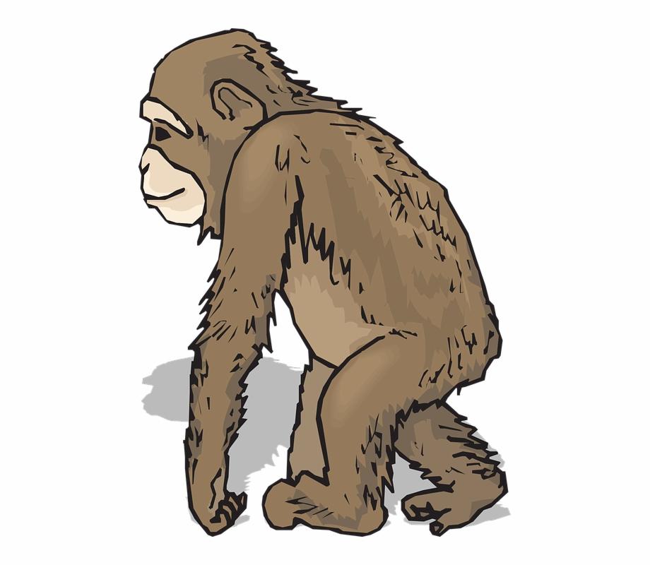 Ape clipart realistic. Monkey clip art pngtube