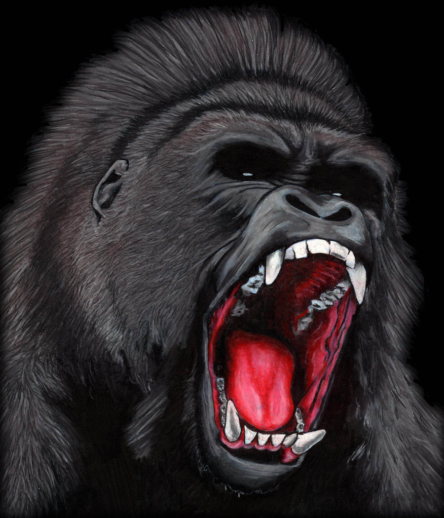 Face drawing at getdrawings. Ape clipart silverback gorilla