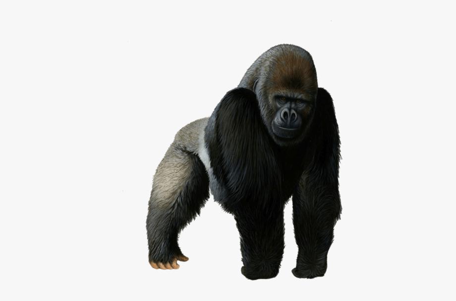 Png transparent cartoon free. Ape clipart silverback gorilla