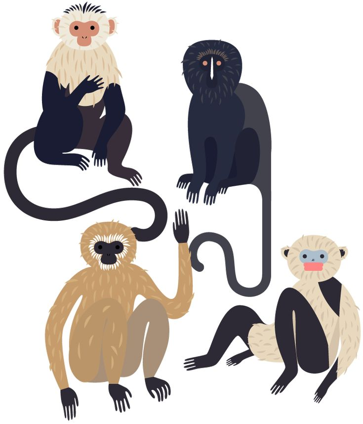 Ape clipart wild monkey.  best and forms