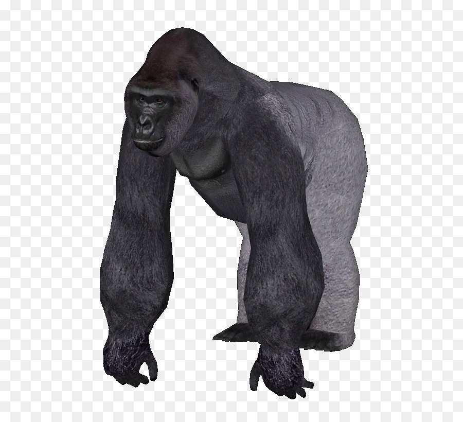 Tycoon common chimpanzee western. Gorilla clipart zoo gorilla