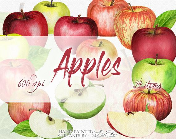 Watercolor apples clip art. Apple clipart illustration