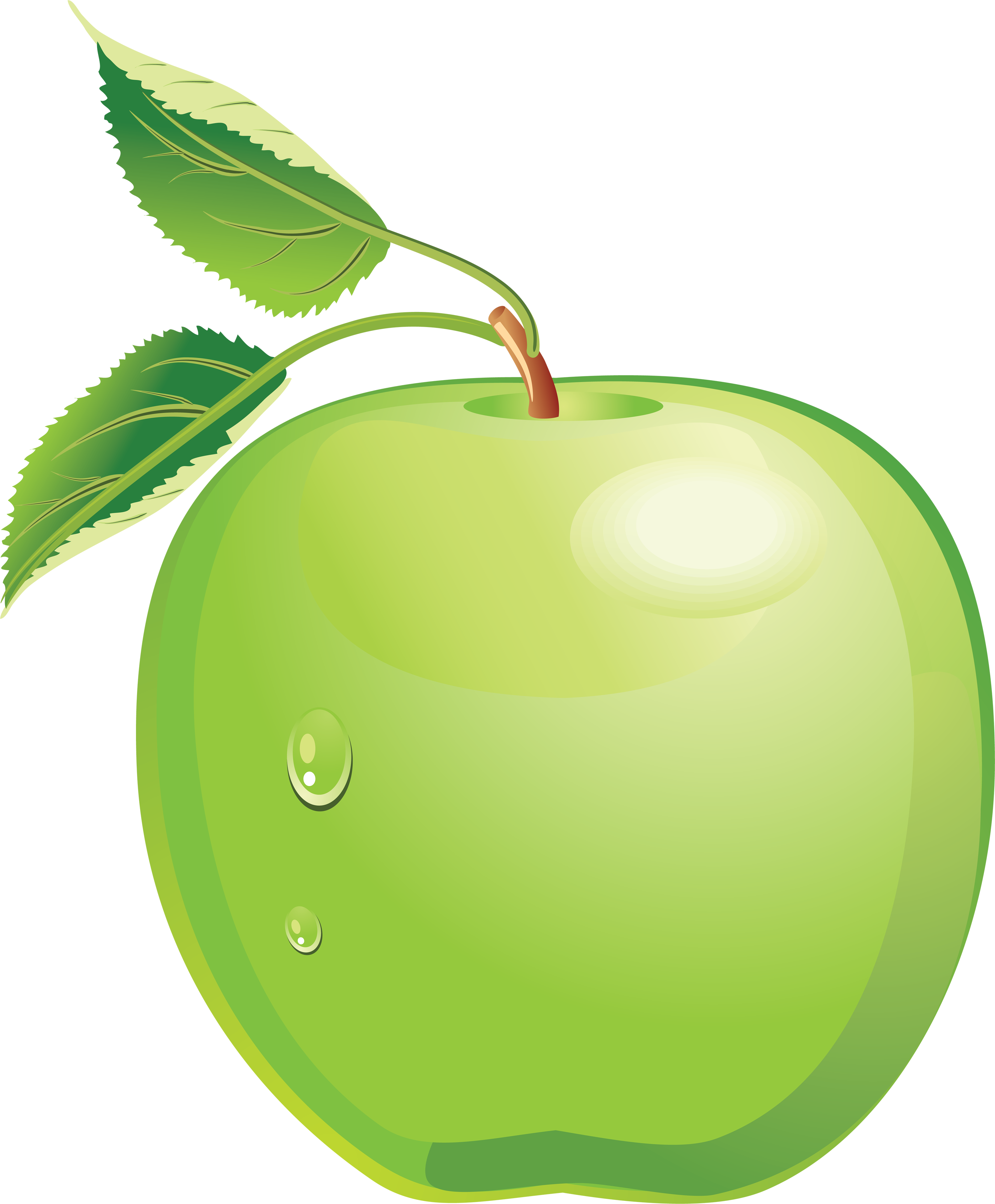 Apple one isolated stock. Watermelon clipart green object