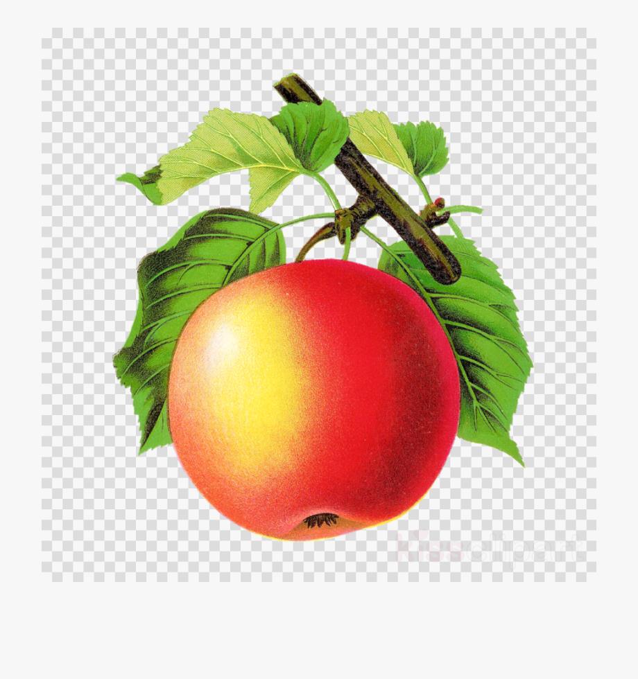 Apple png tomato clip. Apples clipart vintage