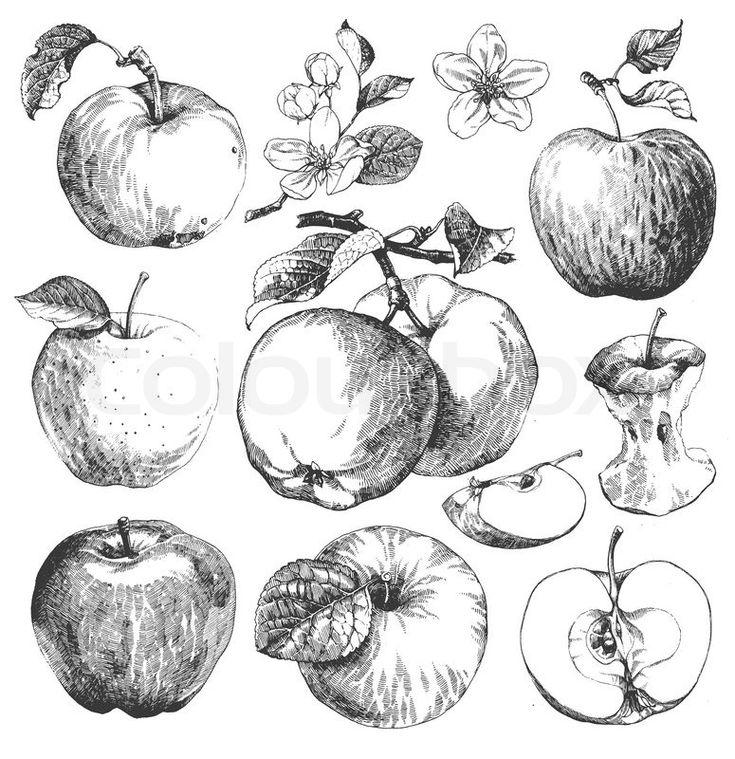 Apples clipart vintage.  best black and