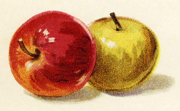 Apples clipart vintage. Red and yellow illustration