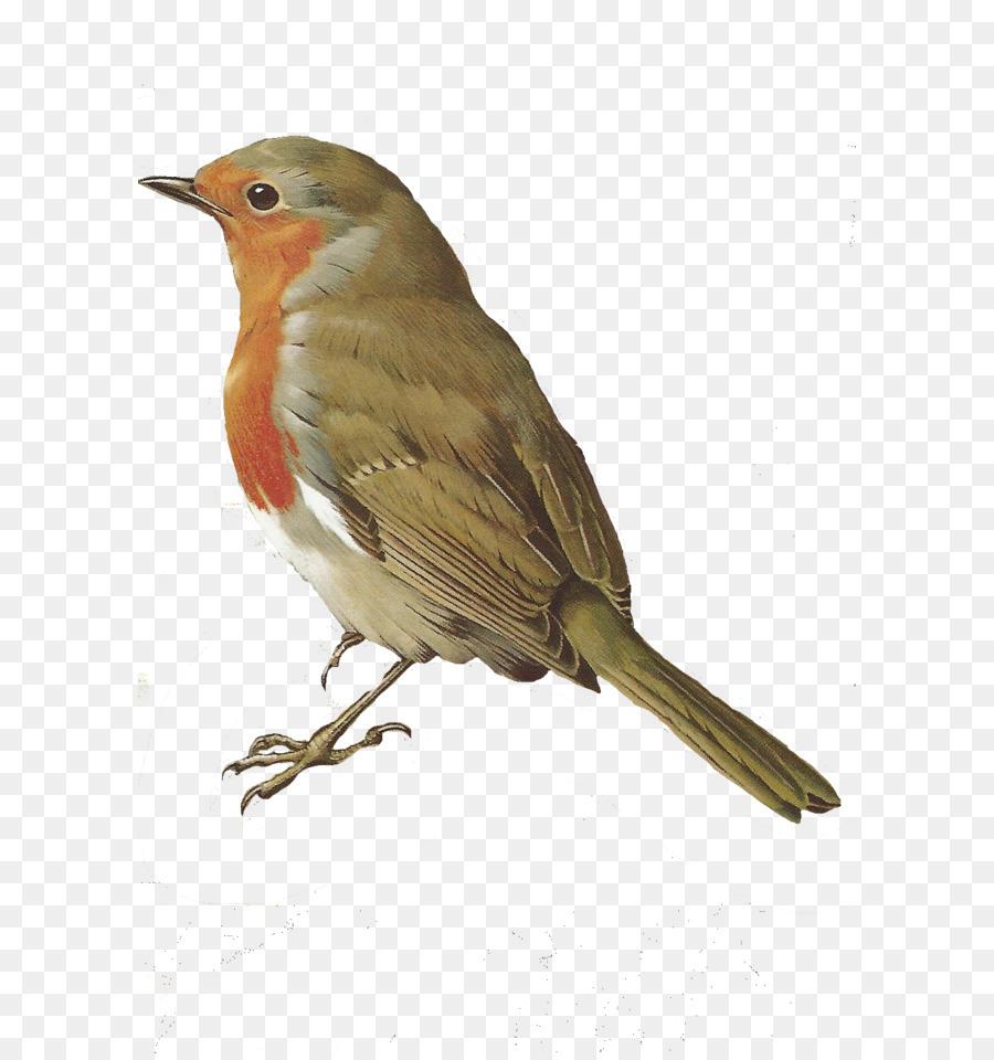 april clipart bird