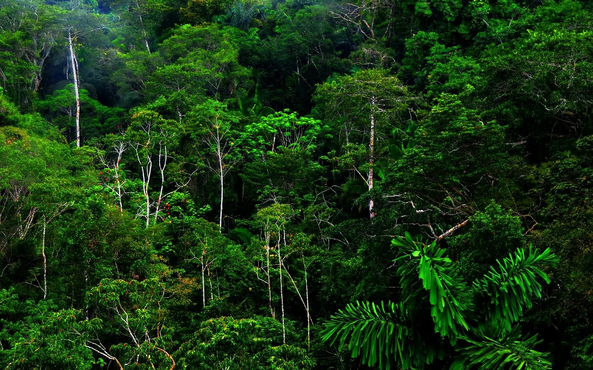 Wallpapers amazing high definition. Rainforest clipart dense jungle