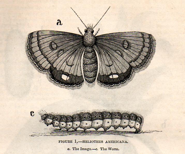 The moth free clip. April clipart vintage