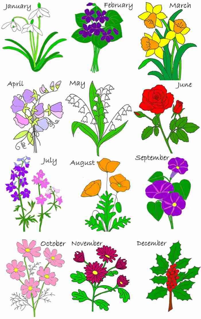 Birth month flowers list. April clipart wildflower