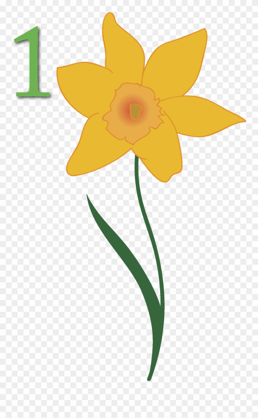 Flower yellow narcissus petal. April clipart wildflower