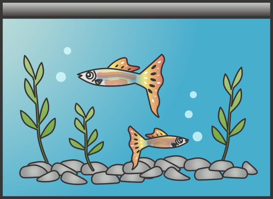 Fish cartoon art illustration. Aquarium clipart
