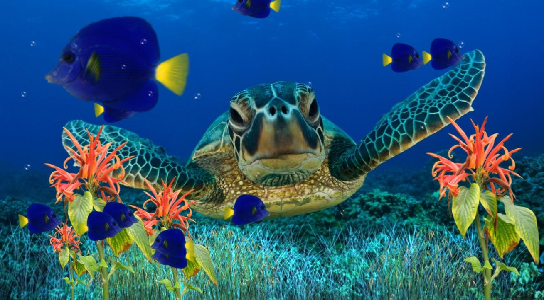 Fresh free desktop wallpaper. Aquarium clipart animated