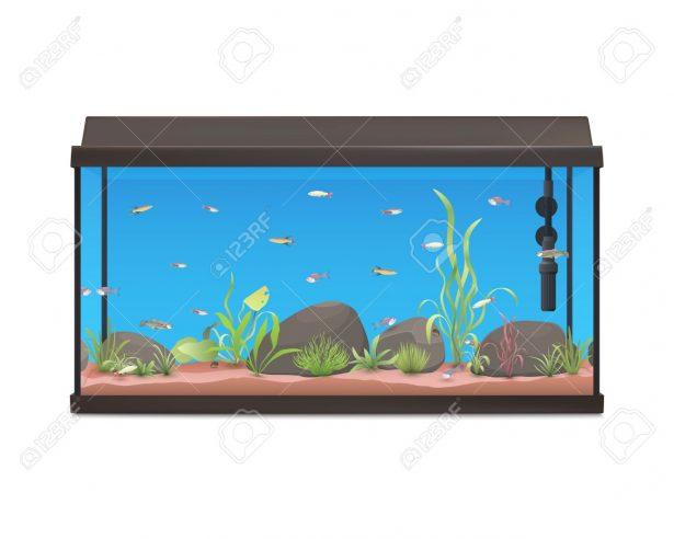 Fish tank cartoon bowl. Aquarium clipart animated