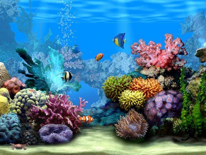For windows free clip. Aquarium clipart animated