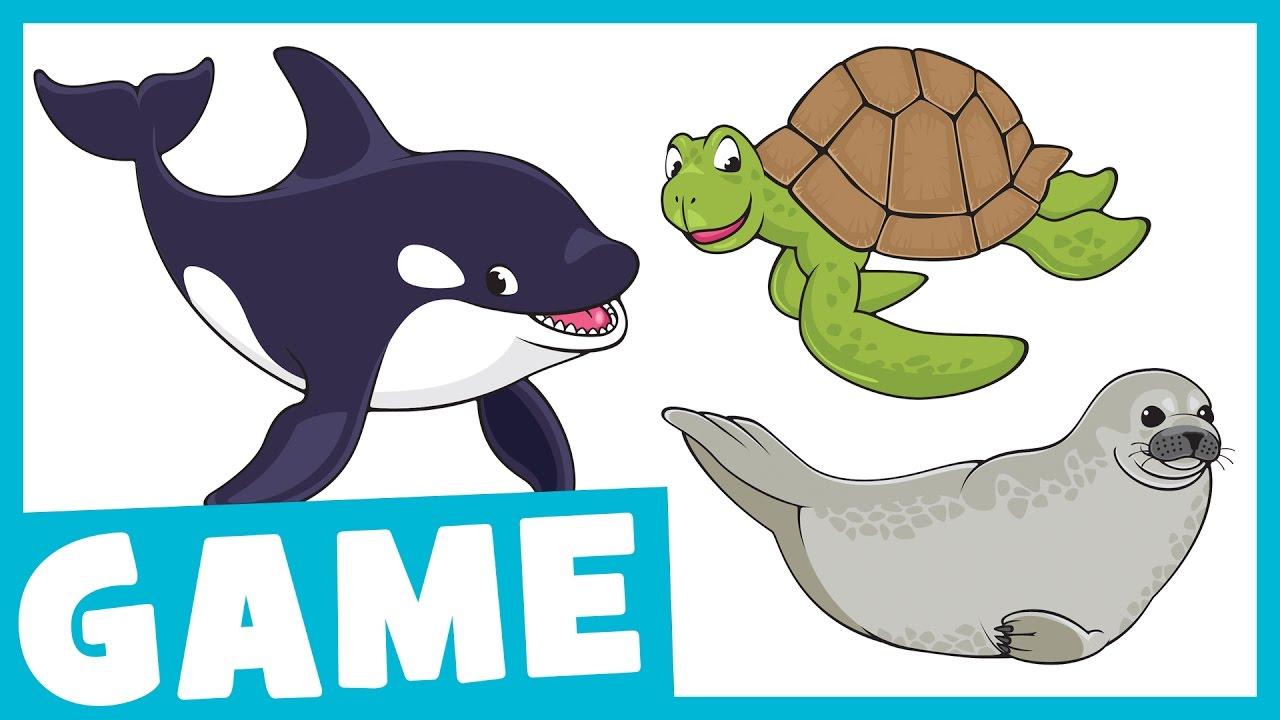 Aquarium clipart aquarium animal. Learn animals what is