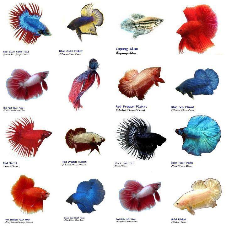Aquarium clipart aquarium animal.  best pets reptiles