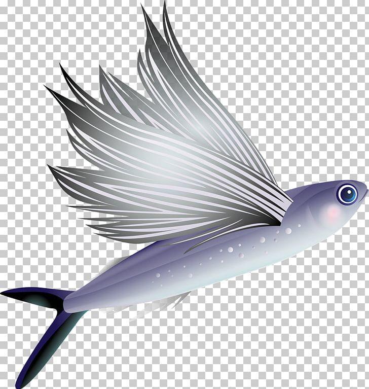 Aquarium clipart aquarium animal. Flying fish vertebrate png