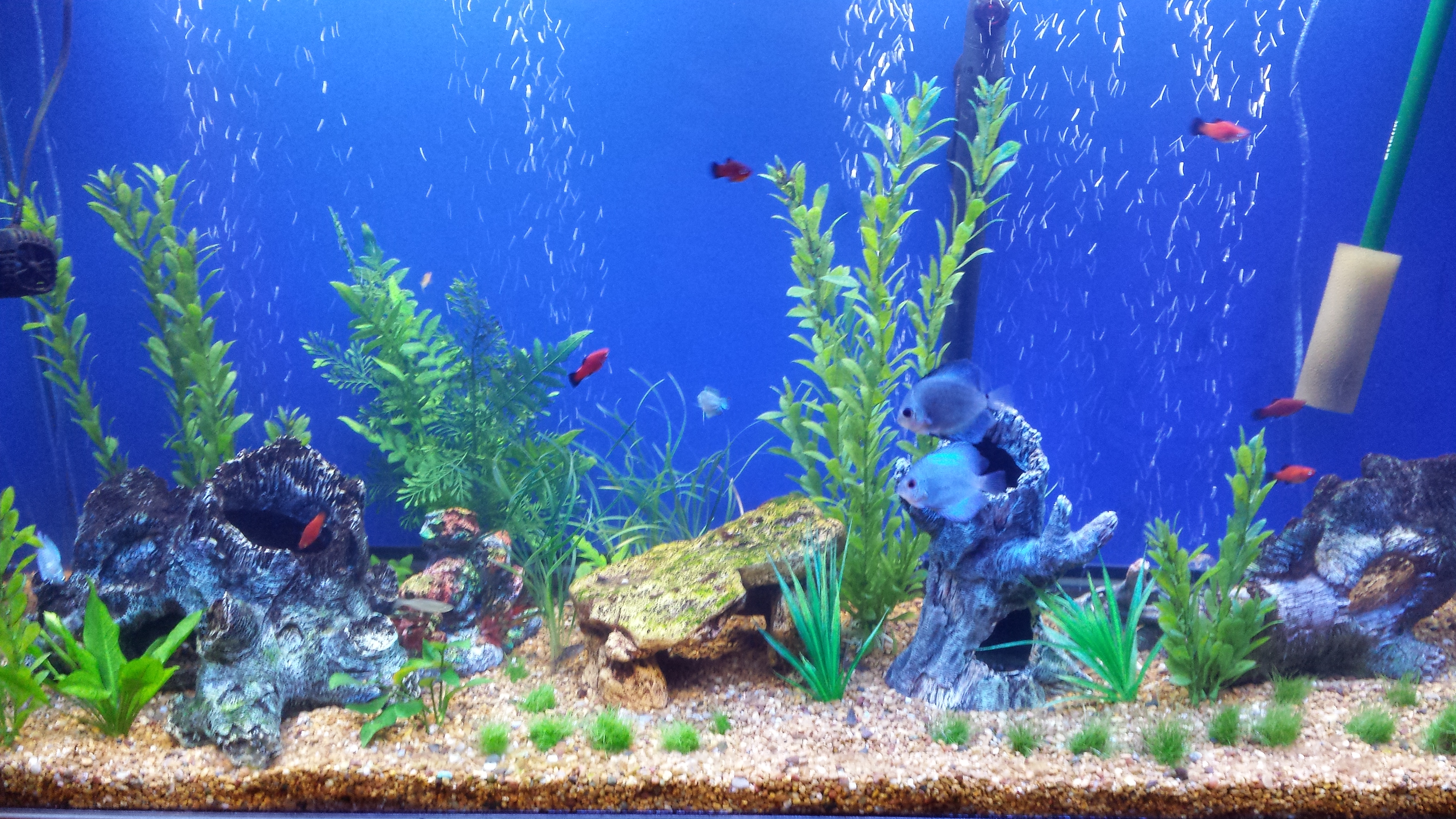 Fish tank backgrounds to. Aquarium clipart aquarium background