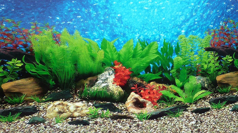Pictures incep imagine ex. Aquarium clipart aquarium background