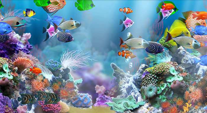 image relating to Aquarium Backgrounds Printable named Aquarium clipart aquarium historical past, Aquarium aquarium