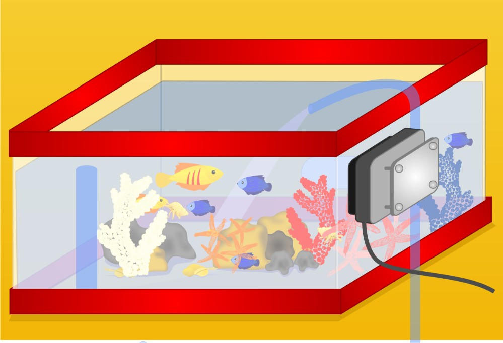 Aquarium clipart aquarium building. How to set up