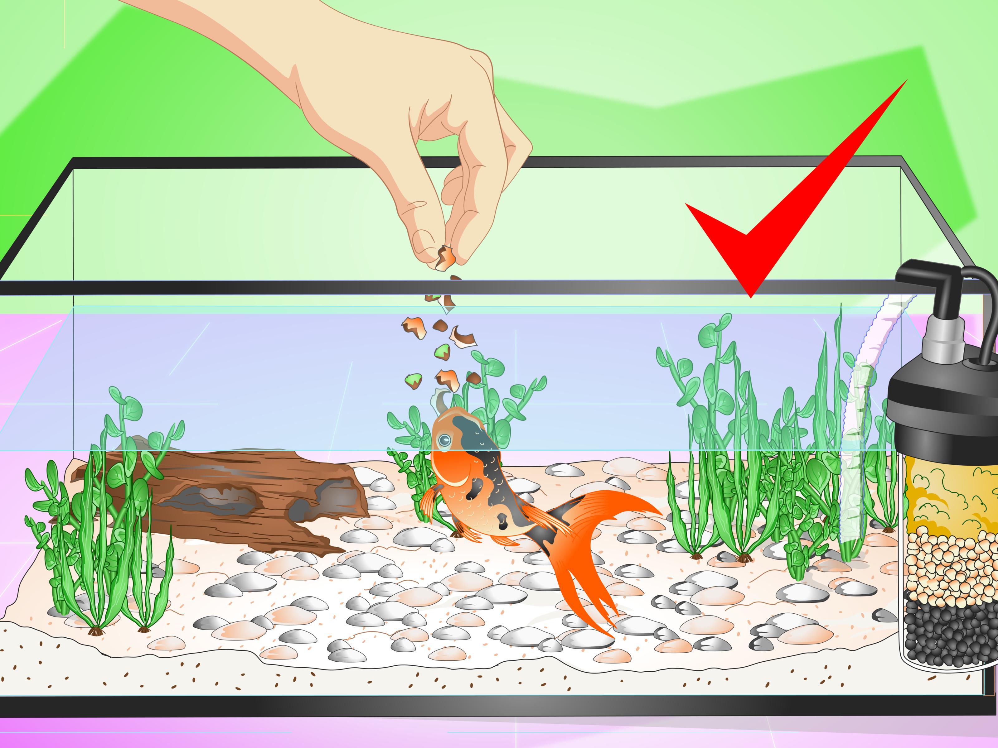 How to set up. Aquarium clipart aquarium design