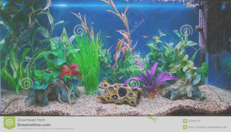 Fish tank cliparts for. Aquarium clipart aquarium design