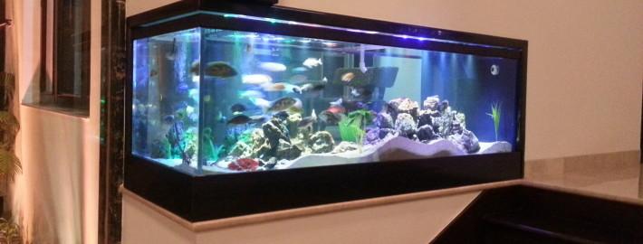 Corner way in a. Aquarium clipart aquarium design