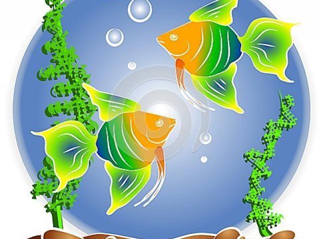 Fish tank free on. Aquarium clipart border