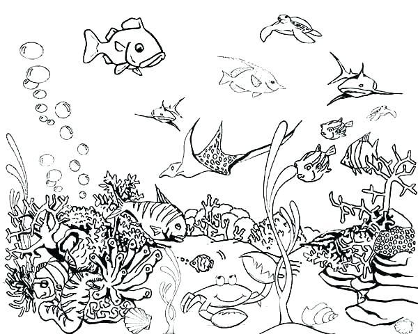 Aquarium Coloring Page   PicGifs.com   480x600