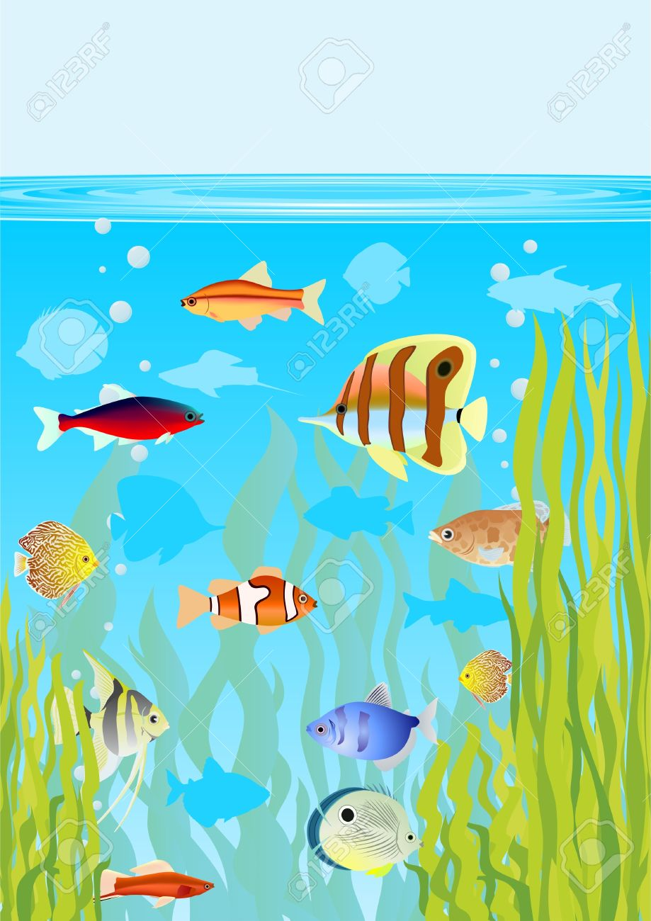 Aquarium clipart drawing. Fish tank fishes in