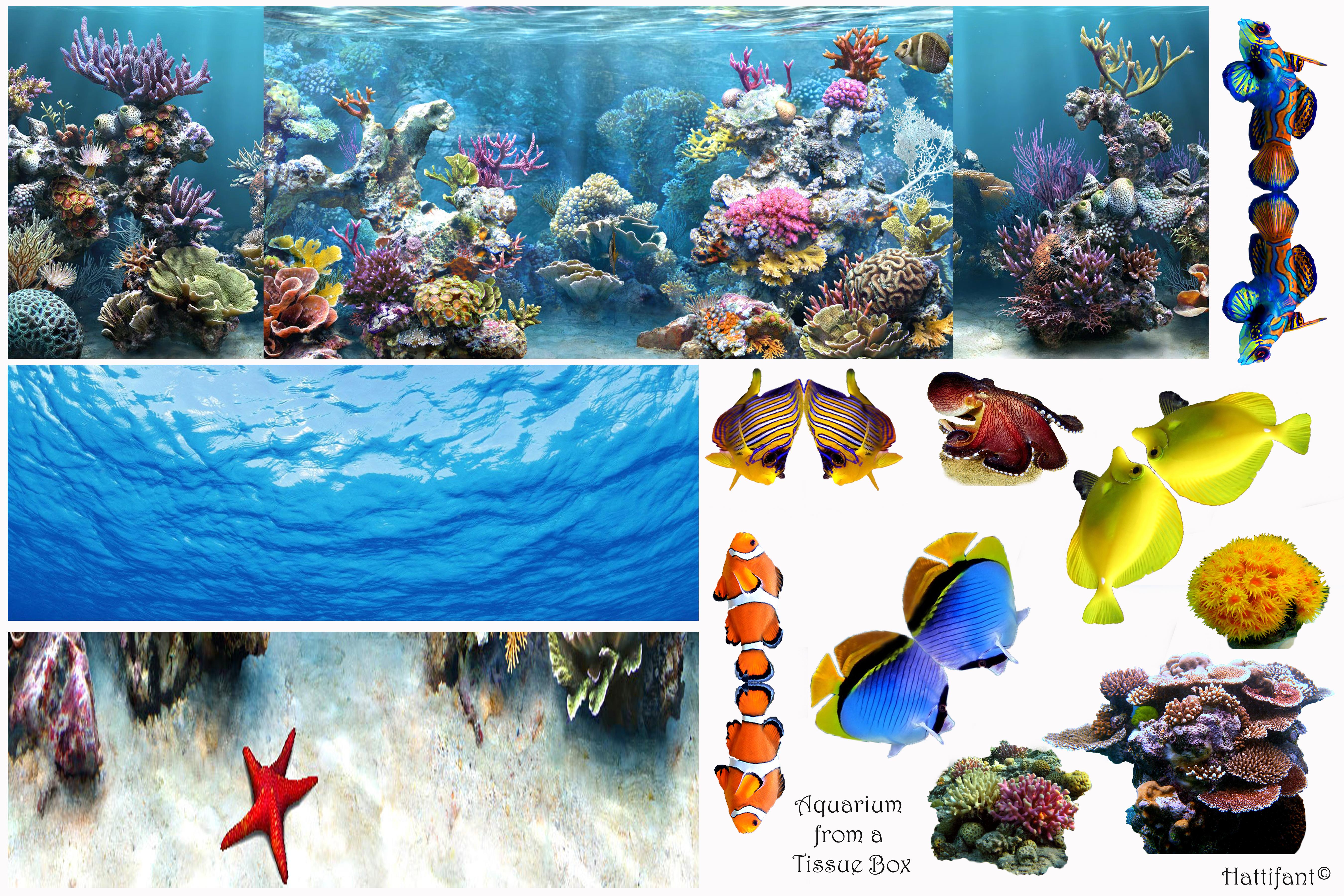 Aquarium clipart empty square aquarium. Tissue box what do