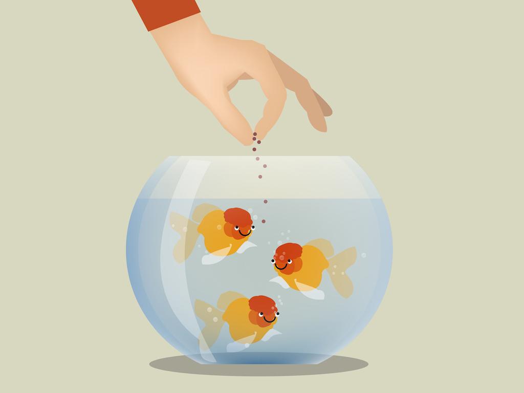 Automatic feeders reviews the. Aquarium clipart fish feeder