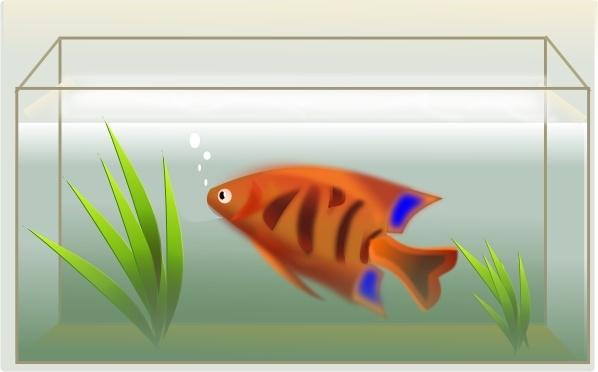 Aquarium fish feeder