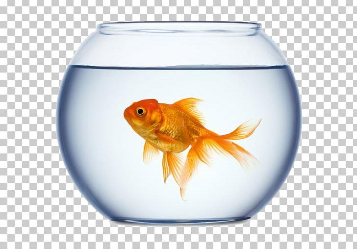 Aquarium clipart goldfish bowl. Stock photography png animals