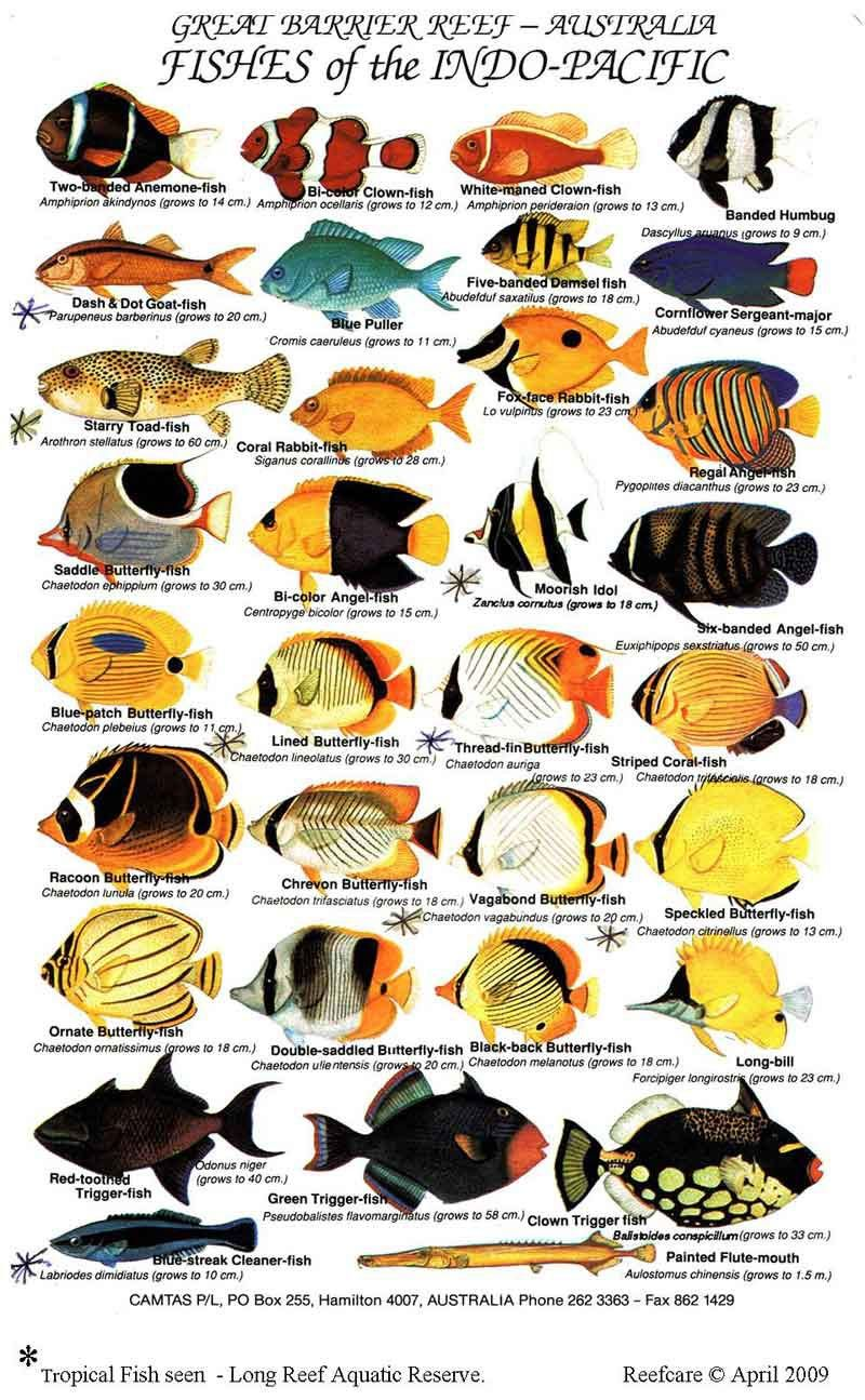 Aquarium clipart pet fish. Saltwater guide pinterest